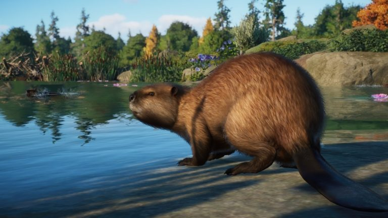 Planet Zoo gets beavers, moose, and more in next month's North America Animal Pack DLC • Eurogamer.net
