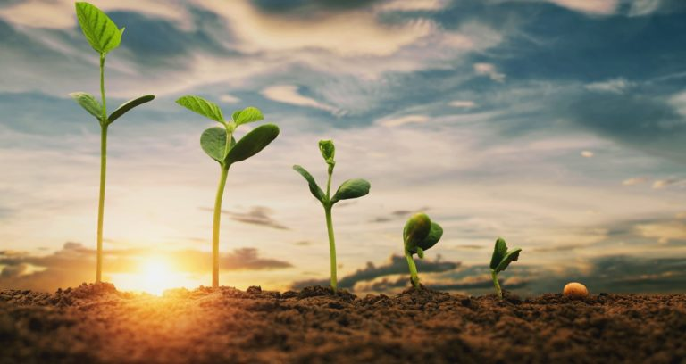 Startups Harness AI to Nurture the Future of Agriculture